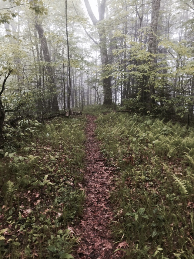 Walking a verdant path through the high clouds in the Smokies