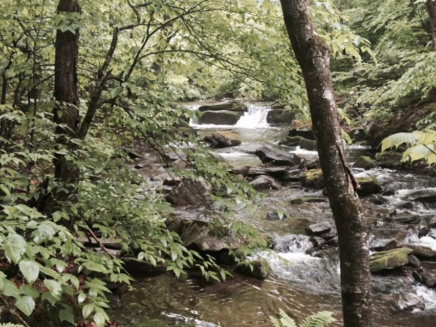 Beaverkill Stream.
