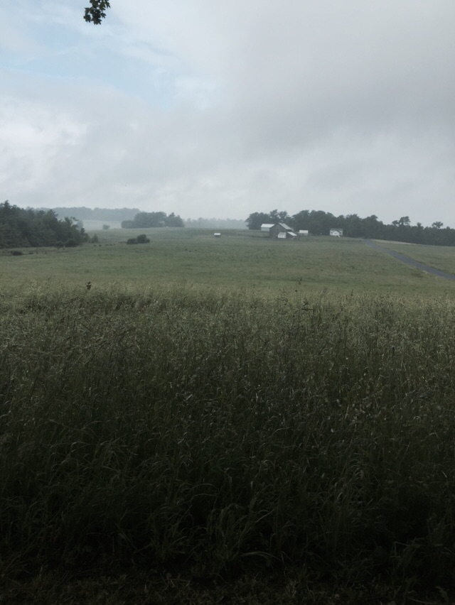 A misty day in the fields