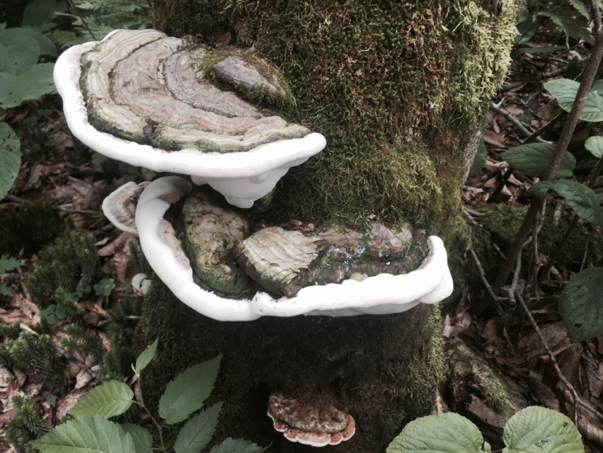 The fungus among us!