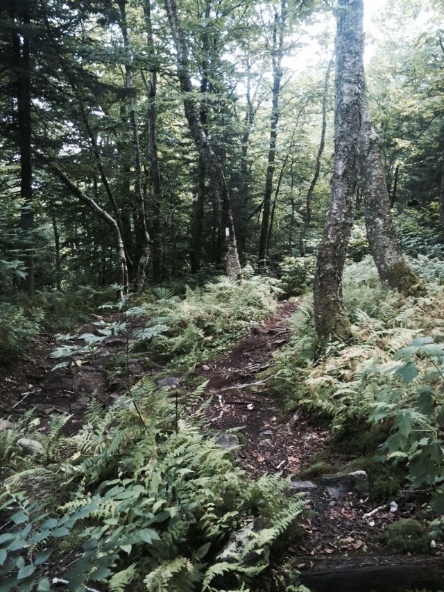 A blaze in the middle of the trail, surrounded by ferns.