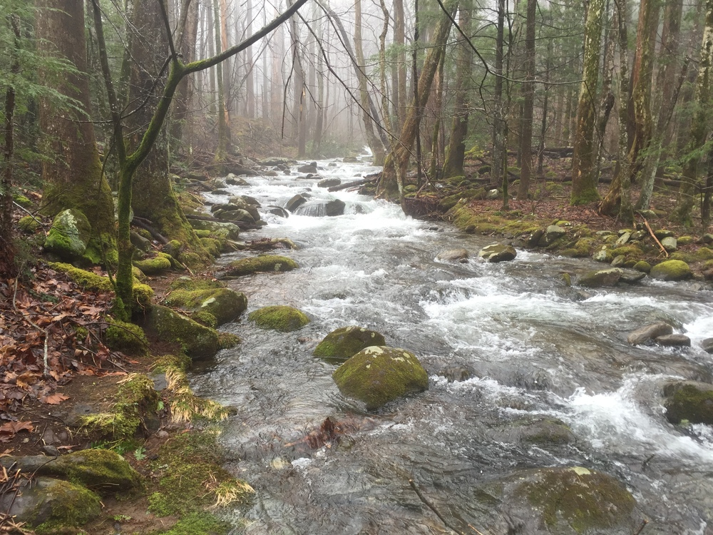 A foggy and beautiful LeConte Creek in the early morning.  The water rushing past us only moments ago came down Rainbow Falls!
