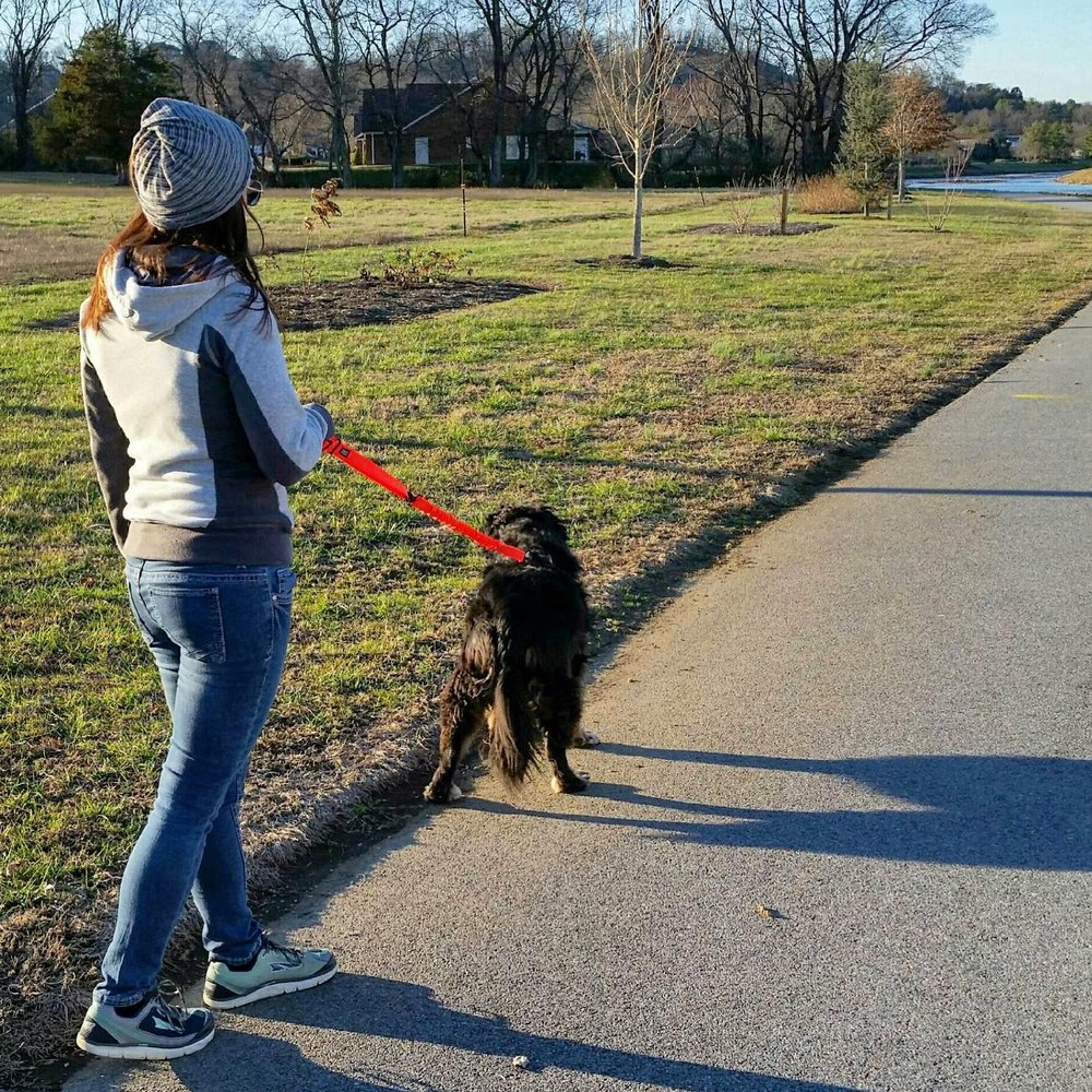 Going for the hand-held option when we're walking - it lets the leash be longer so she can get to all the things she wants to see!