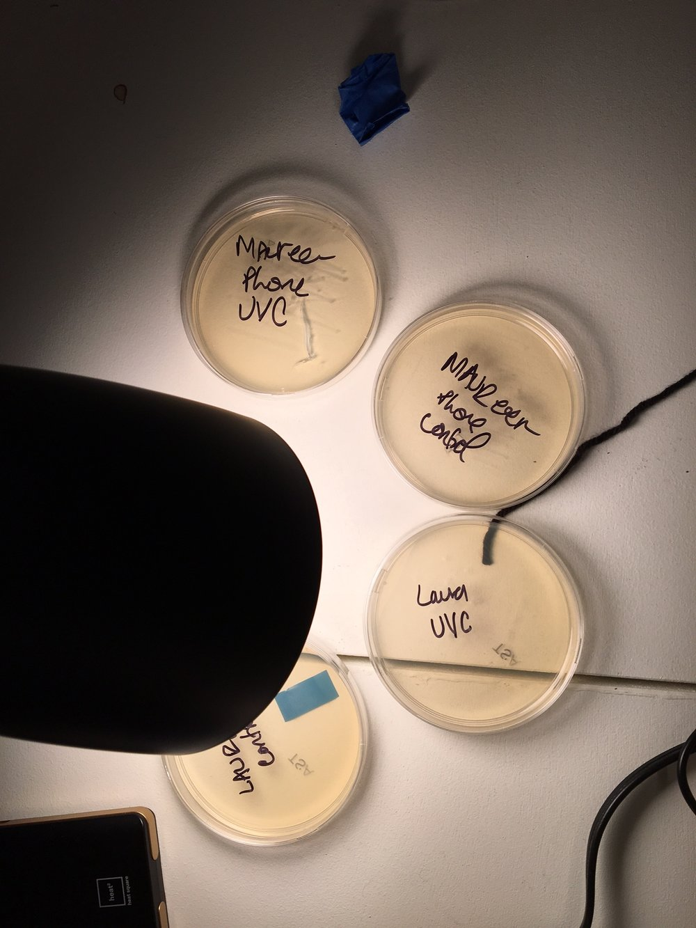 Growing bacteria sampled from two household objects