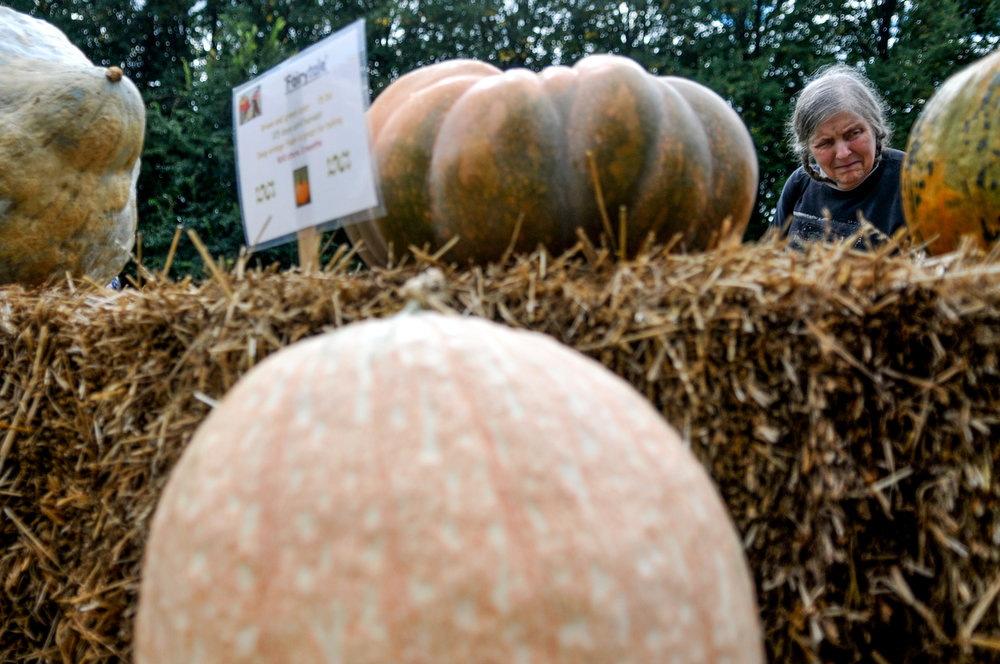 Nancy Rozycki, of Flint, compares and admires a variety  of gourds and pumpkins during the 15th annual Fall Harvest Festival on Saturday, Sept. 24, 2016 at Applewood Estate in Flint.