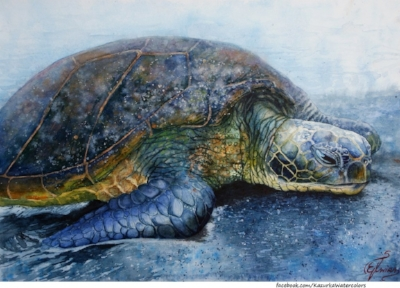 http://kazurka-watercolors.deviantart.com/art/Turtle-watercolor-397926579