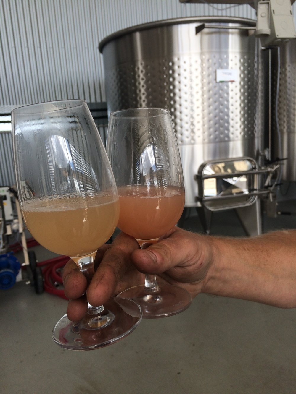 Pinot Gris 2 ways. Tank fermented on the left, barrel fermented on the right. The barrel allows more air in to the wine causing oxidation.