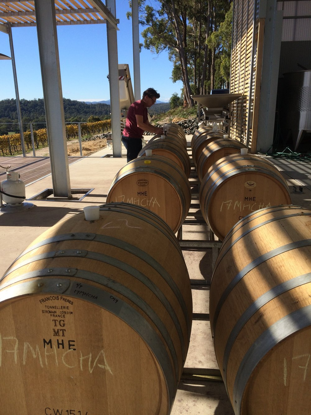 Checking on the progress of the Chardonnay fermenting in barrel. Not a bad office for our winemaker to work in.