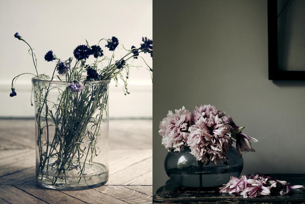 FLOWERS 53969.jpg