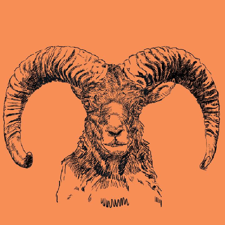 Goat-face.jpg