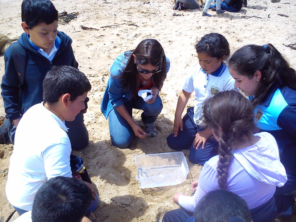 Environmental education. Recognition of the coastal intertidal zone. Francisca López (002).jpg