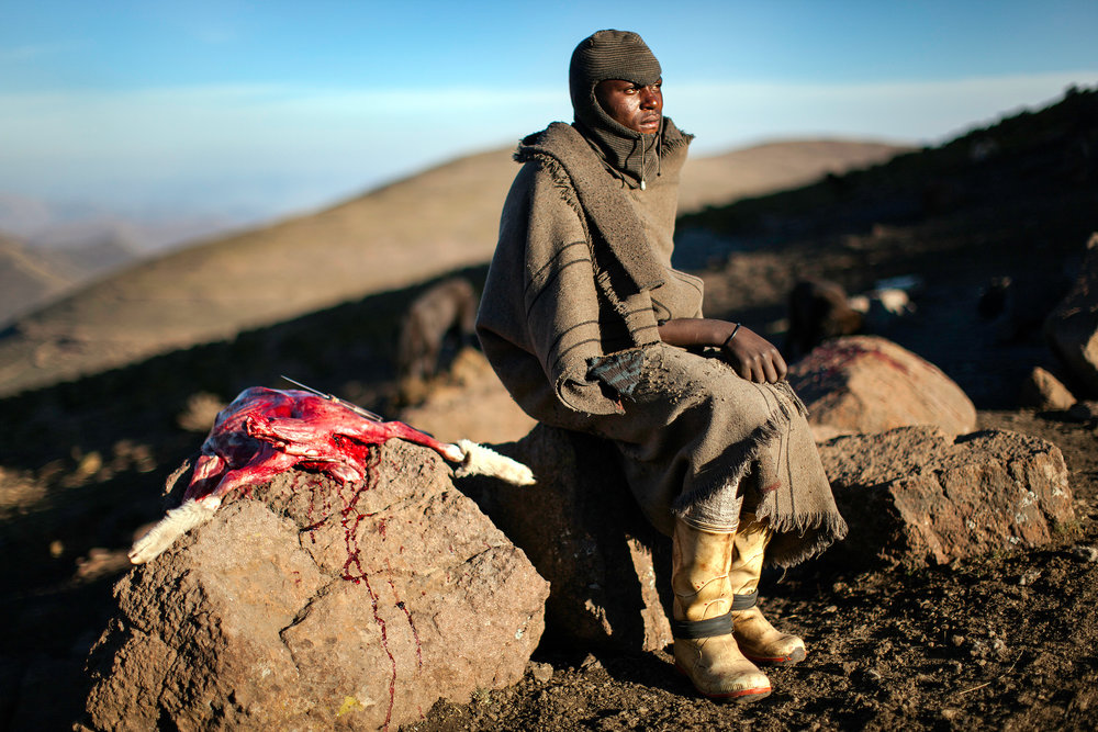 Herdboy with recently slaughtered sheep.Lesotho. 2010.