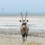 oryx-2-150x150.jpg