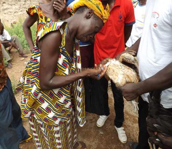 A woman from a DGM beneficiary community in Burkina Faso learning to vaccinate chickens, an activity traditionally done by men. Photo Credit: DGM Burkina Faso