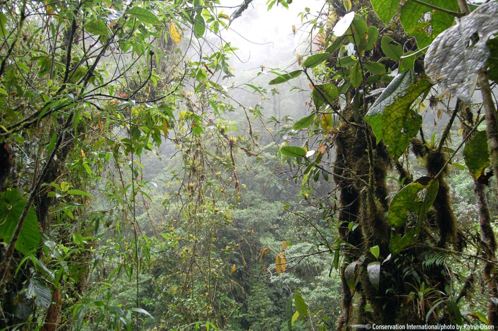 Proyecto del MDE sin título - Fondos distribuidos: 4,5 millones de USDAprobación del Programa de Inversión Forestal: PendienteAprobación del Banco Mundial: PendienteComité Directivo Nacional: Aún no está establecidoOrganismo Nacional de Ejecución: Aún no está seleccionado
