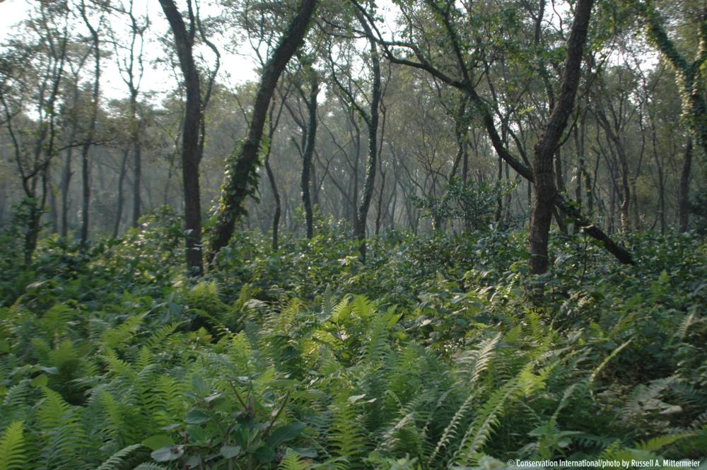Projeto do DGM - ainda sem título - Fundos Alocados: 4,5 milhões de dólaresAprovação do Programa de Investimento Florestal: PendenteAprovação do Banco Mundial: PendenteComitê Gestor Nacional: ListaAgência Executora Nacional: Ainda não selecionada