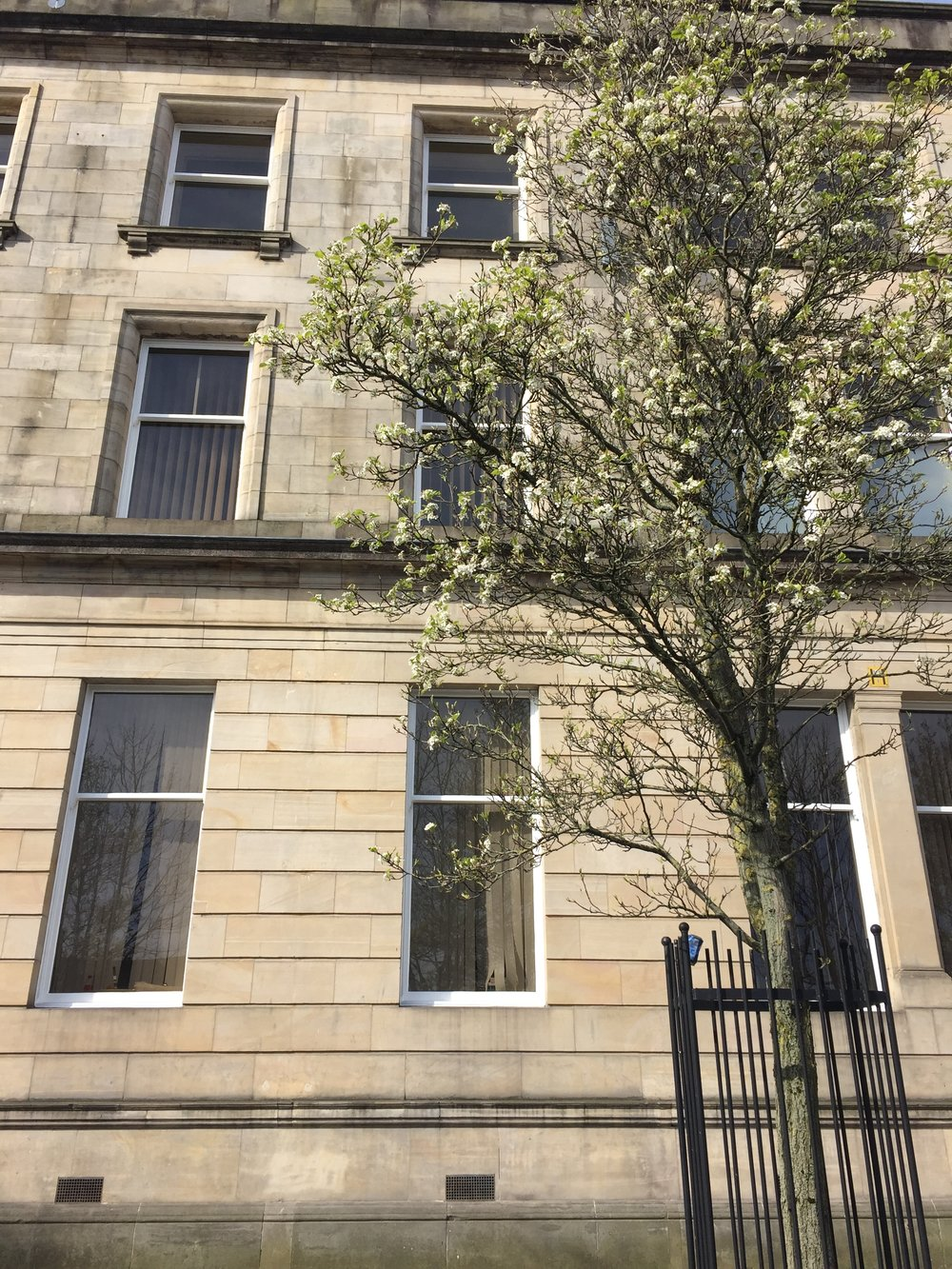 Paisley Side windows.JPG