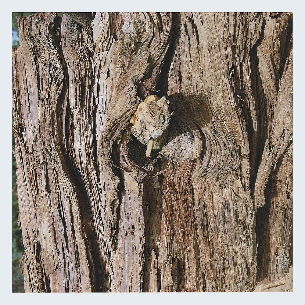 Redwood Bark.jpg