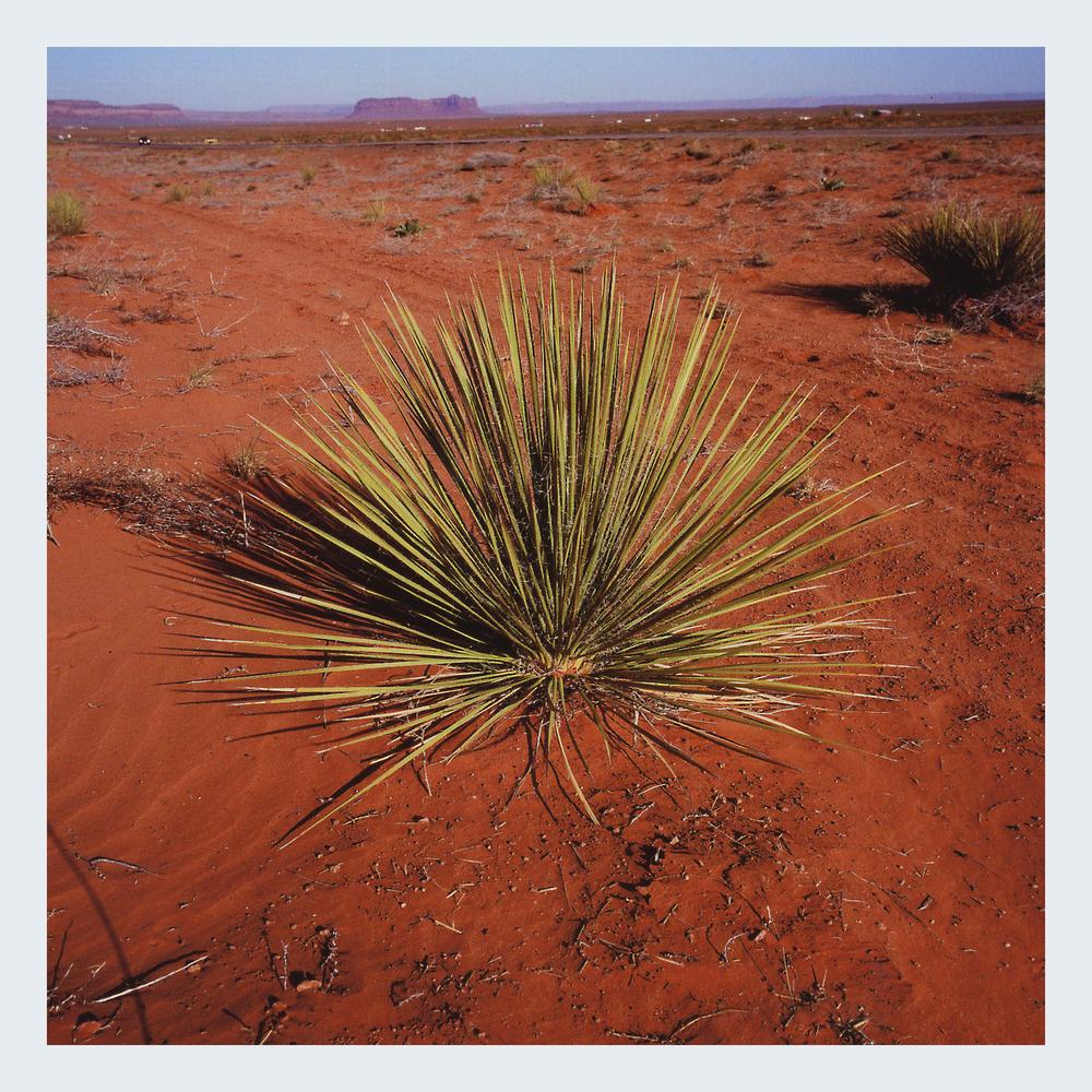 AGAVE PLANT FINAL.jpg