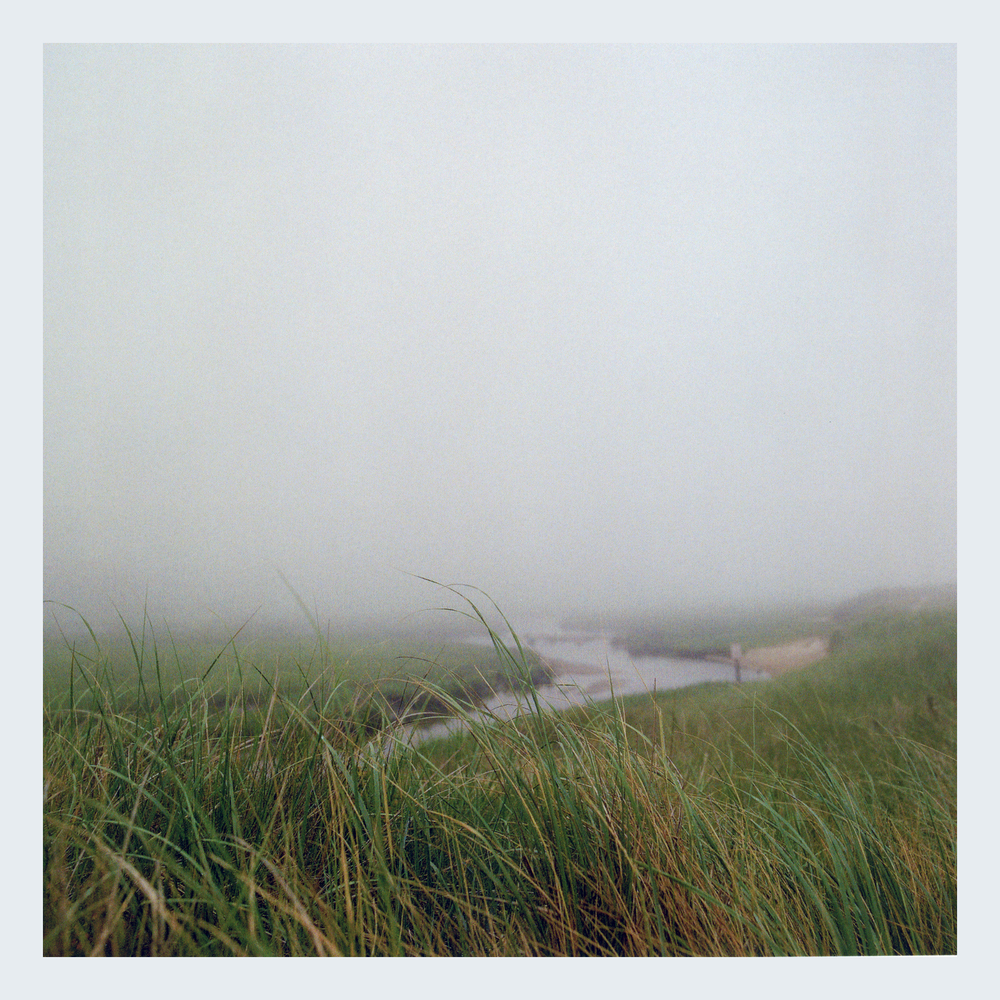 CAPE COD FOG AND GRASS FINAL.jpg