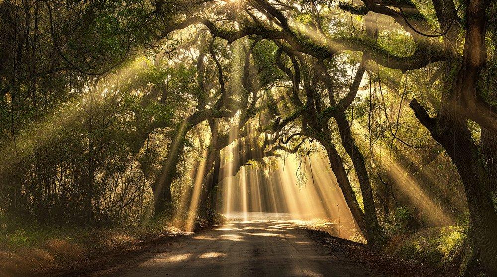 oak trees.jpg