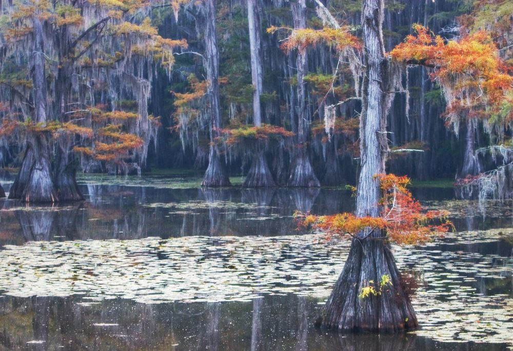Caddo Lake SP, TX