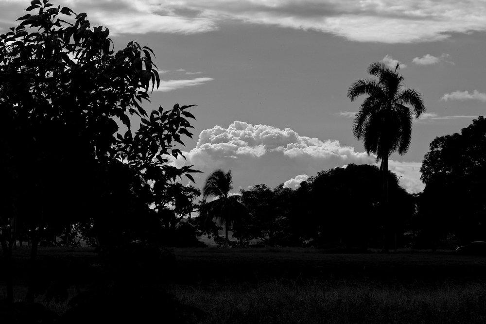 0207_Amador_Pacifique_11202017.jpg
