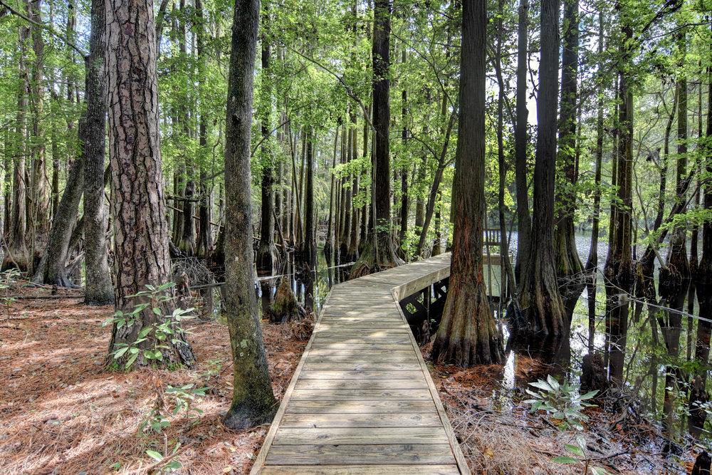 3417 Whimsy Way Wilmington NC-print-042-49-Backyard Walkway-4200x2803-300dpi.jpg