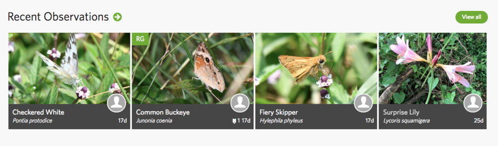 Cooper Creek iNaturalist Page