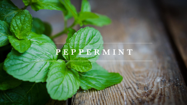 Young Living Peppermint Essential oils-Myrrhmaids