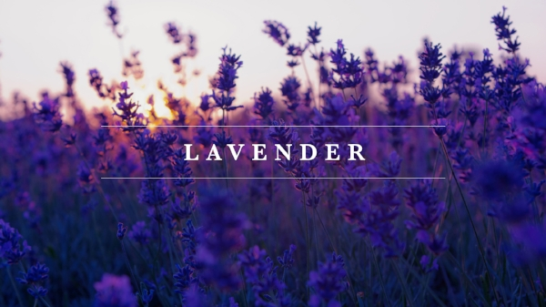 Young Living Lavender, Myrrhmaids