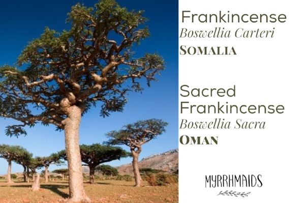 Young Living Frankincense types, myrrhmiads