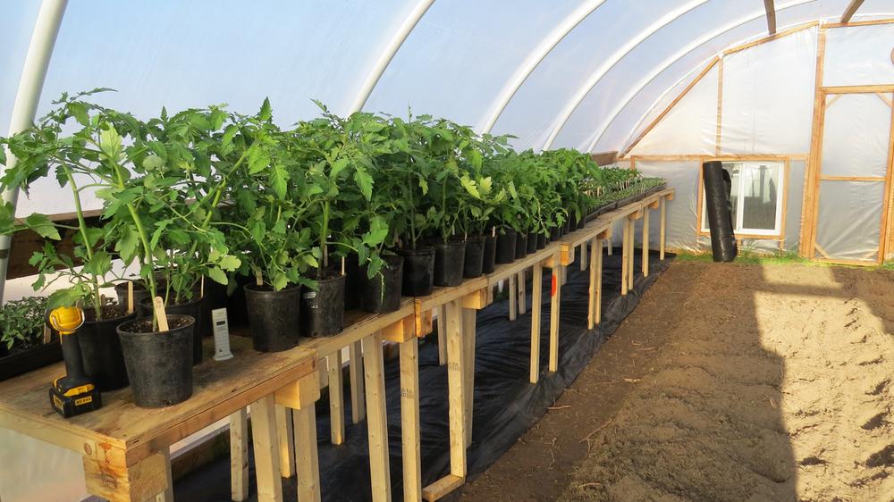 Frankslittlefarm-plantsale.jpg