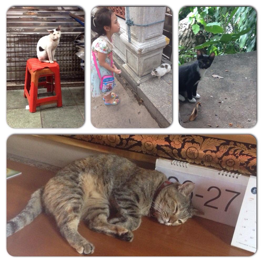 #catsofbangkok