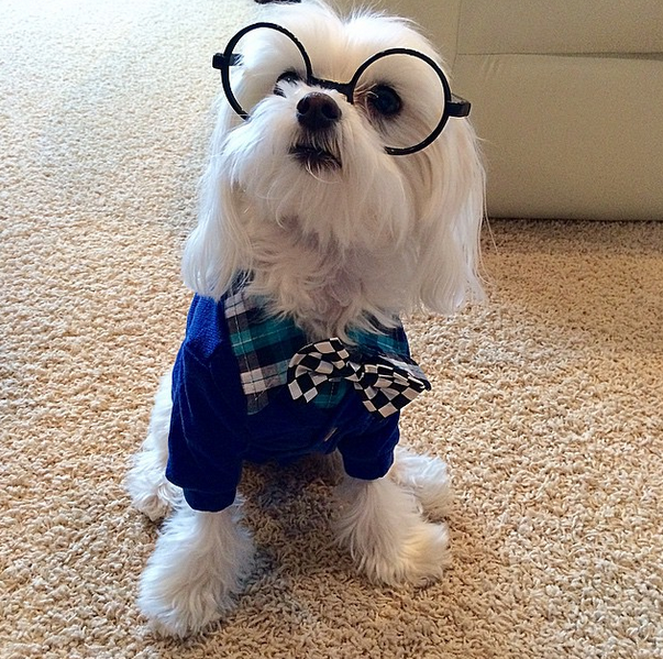 """I simply cannot read Proust without my lenses.""      Photo credit: @dani_and_dennis on Instagram sporting his complete Wagdrobe #Hipsterhound outfit."