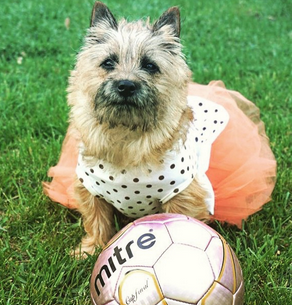 "Weezy (Instagram: missmelliebee15) Dog-tagline: ""Don't let the dress fool you, I could whip your tail in sports ANY DAY!"""