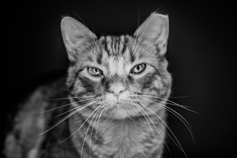 pet+photography+washington+dc+leesburg+vadym+guliuk-100.jpg