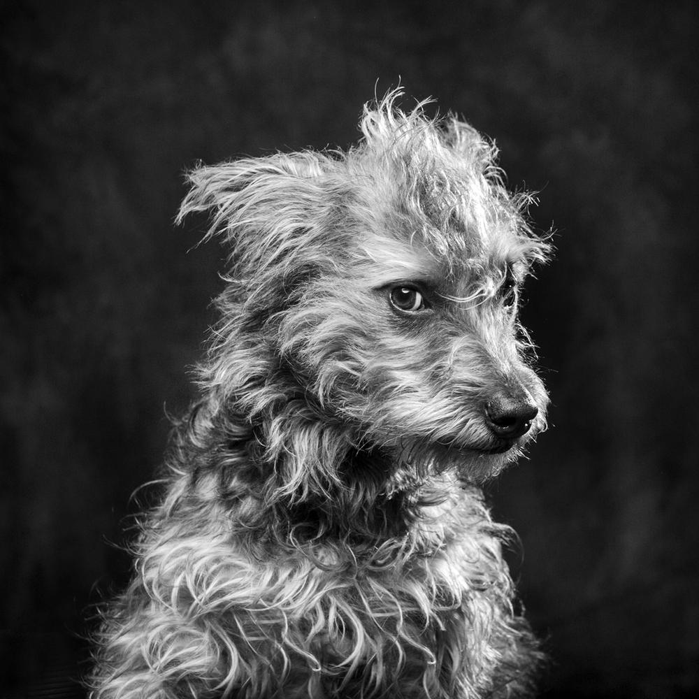 ©Jason Millstein Photography Dog Portrait _Ella1.jpg