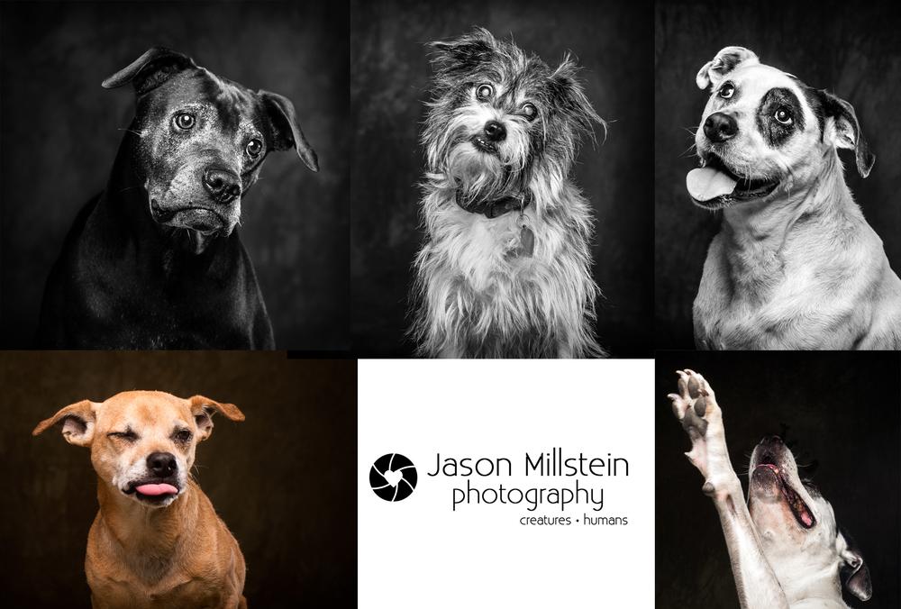Senior Dog Photos.jpg