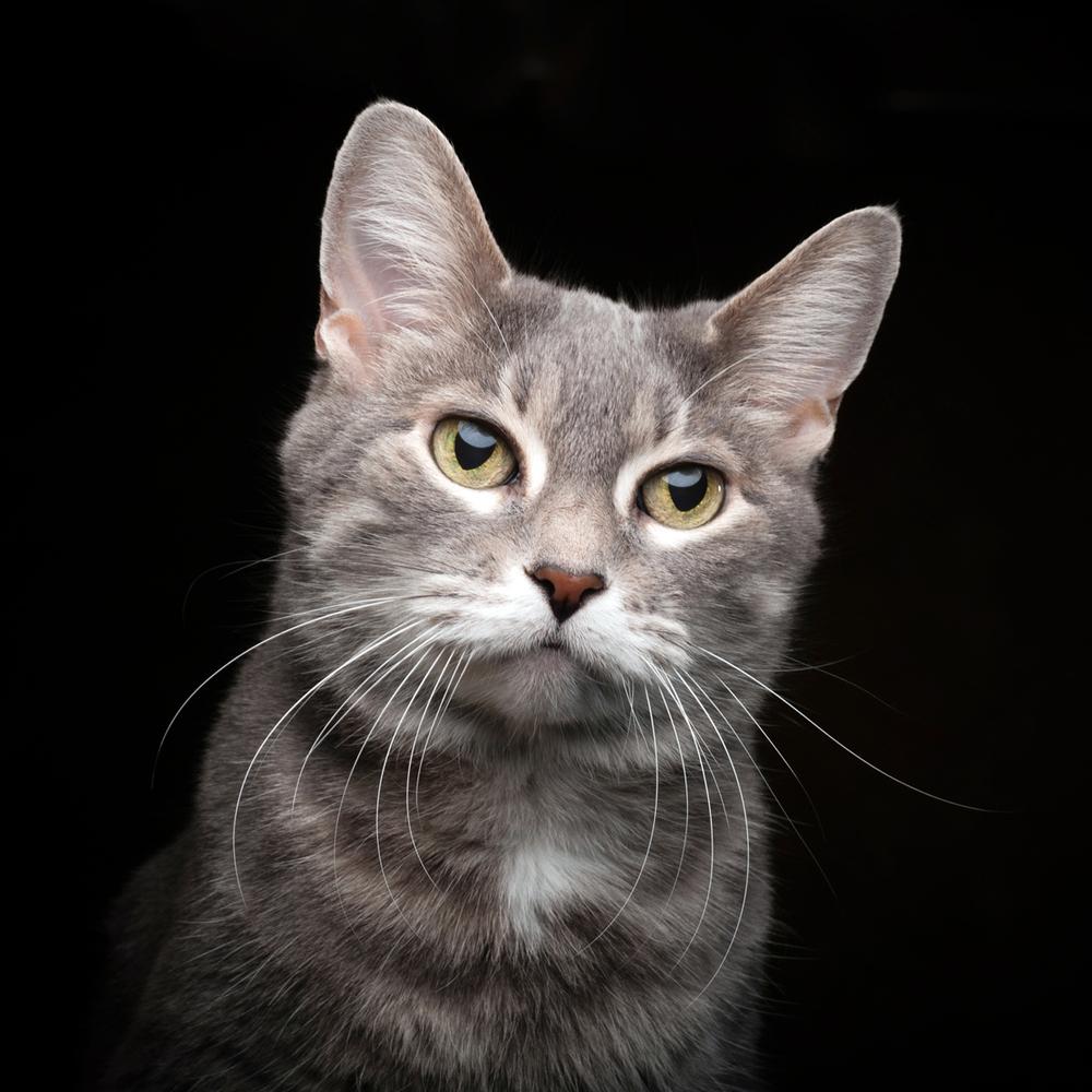 Cat Photograph ©Jason Millstein.jpg