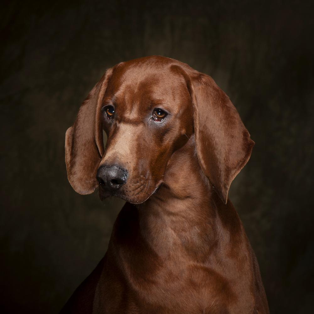Nissen Dogs-06-2.jpg