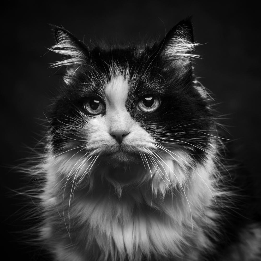 Cat Photograph 11 ©Jason Millstein.jpg
