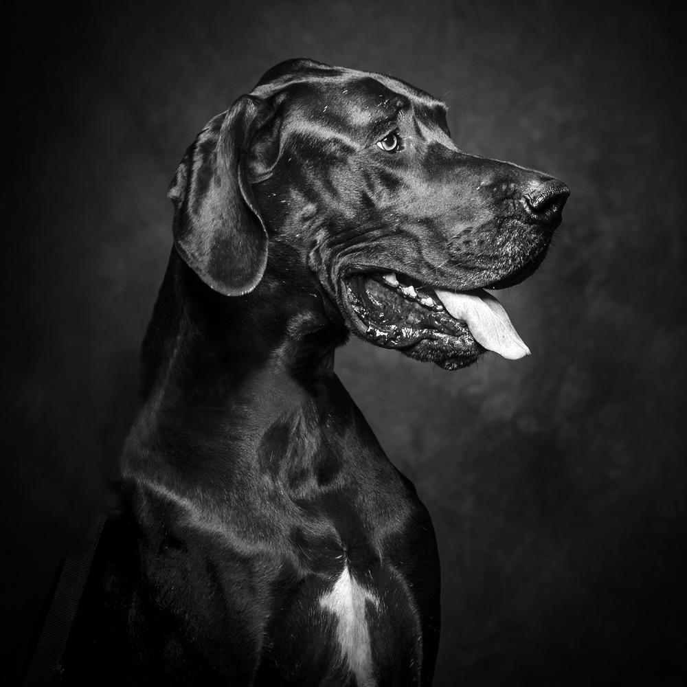 Dog Photograph 20 ©Jason Millstein1.jpg