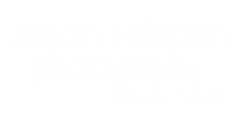 Jason Millstein Photography