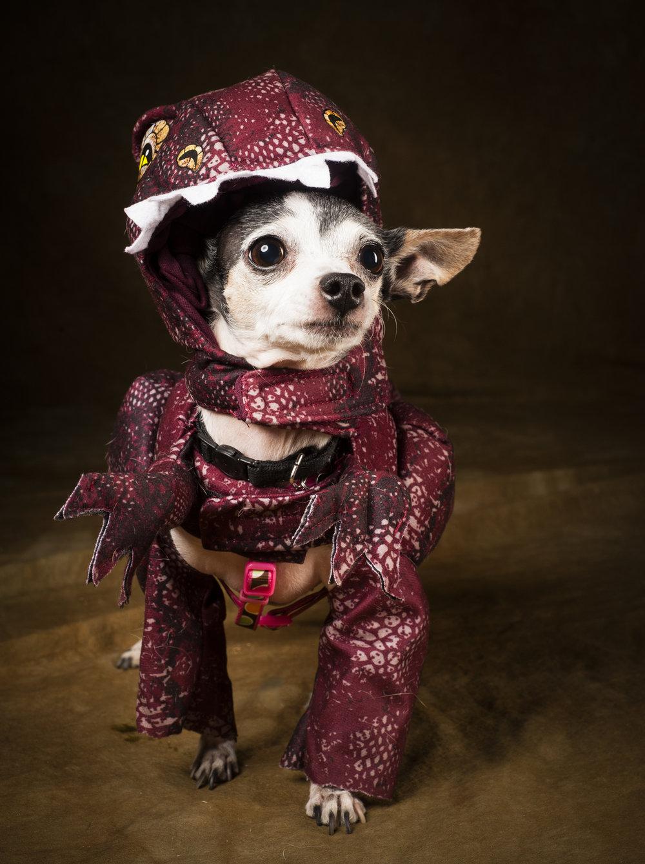 Scottsdale Arizona Dog Photography Jason Millstein-11.jpg