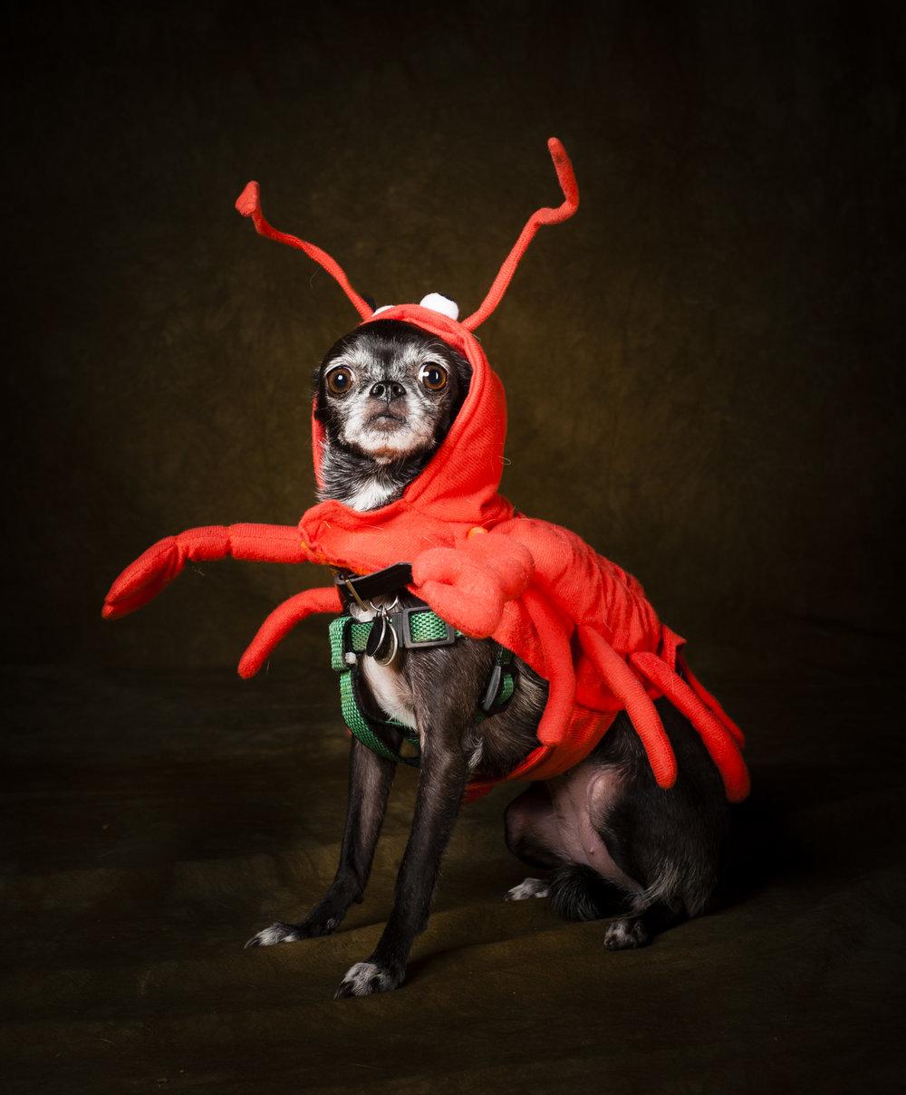 Scottsdale Arizona Dog Photography Jason Millstein-12.jpg