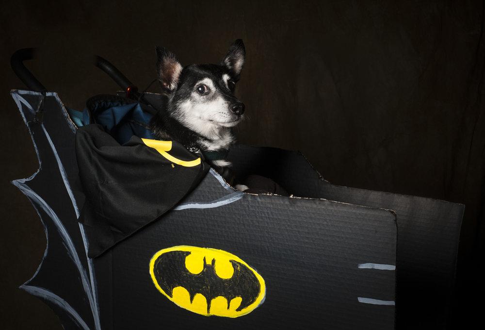 Scottsdale Arizona Dog Photography Jason Millstein-31.jpg