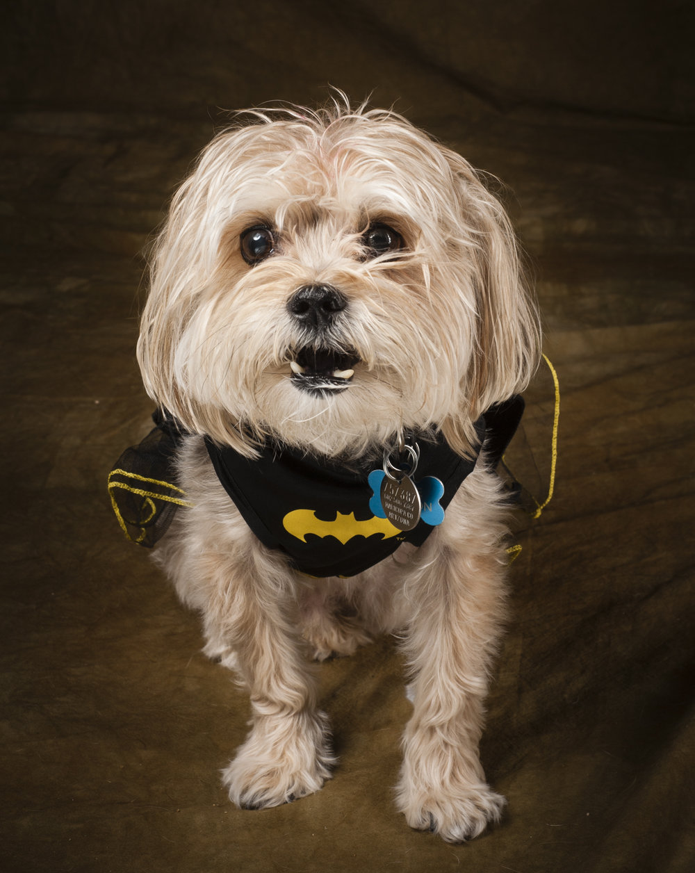 Scottsdale Arizona Dog Photography Jason Millstein-37.jpg