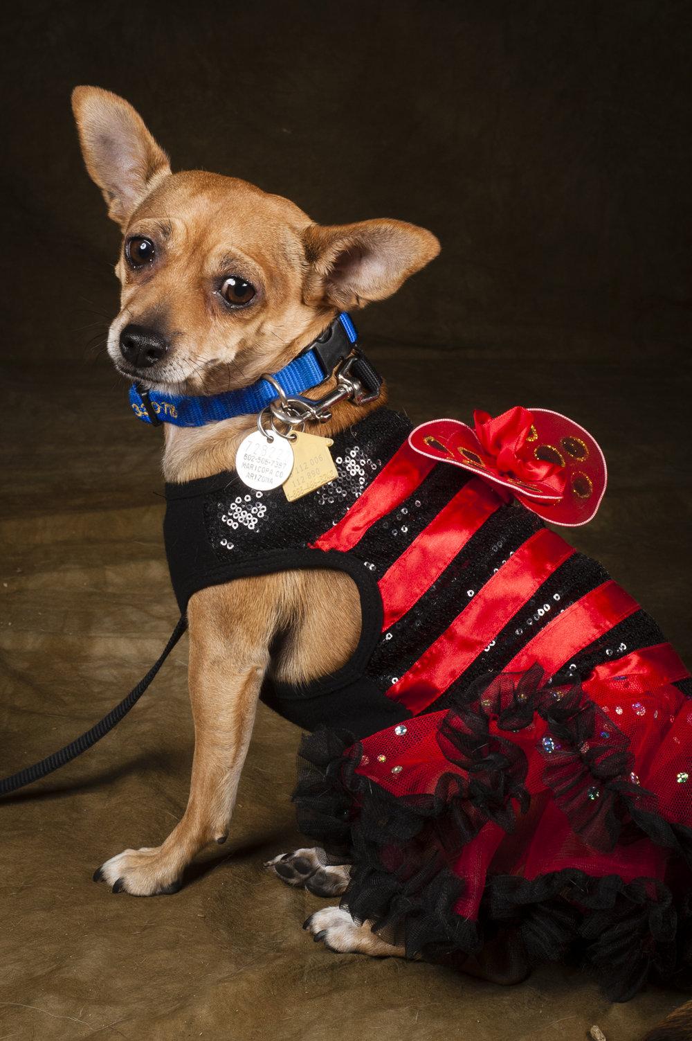 Scottsdale Arizona Dog Photography Jason Millstein-55.jpg