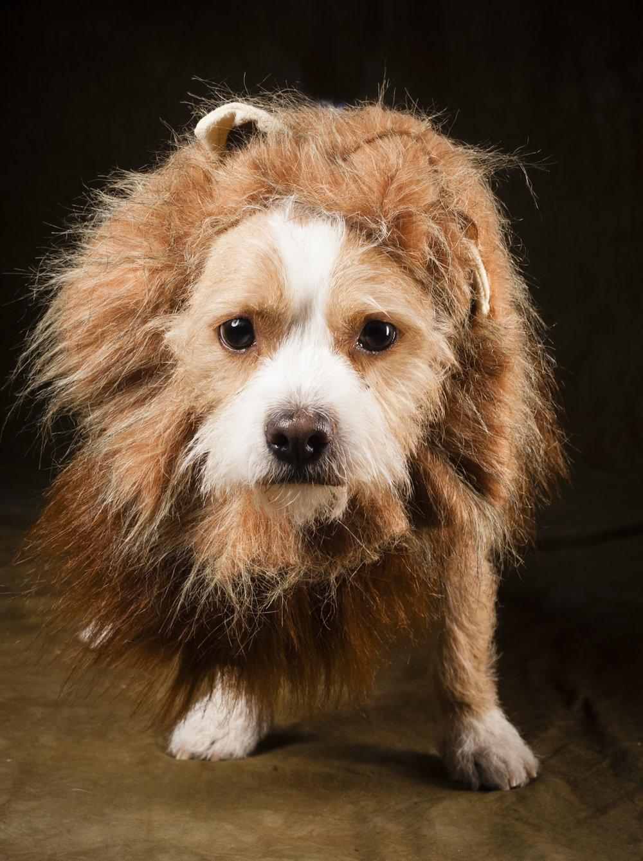 Scottsdale Arizona Dog Photography Jason Millstein-18.jpg
